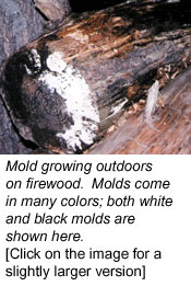 Mold Growing Outdoors on Firewood